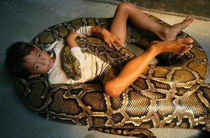 Serpente rapidnews blog for Veleno per serpenti